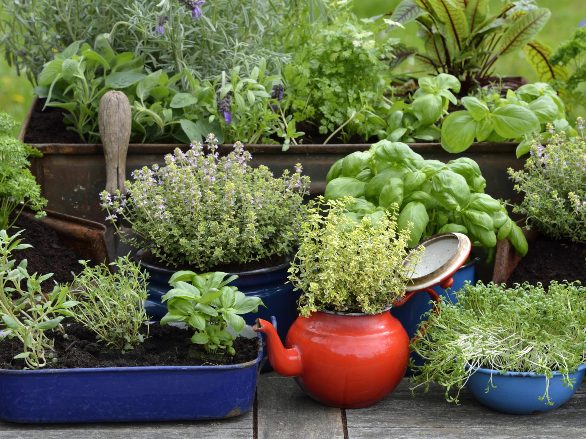 gartentipps f r den april schneiden d ngen pflanzen. Black Bedroom Furniture Sets. Home Design Ideas