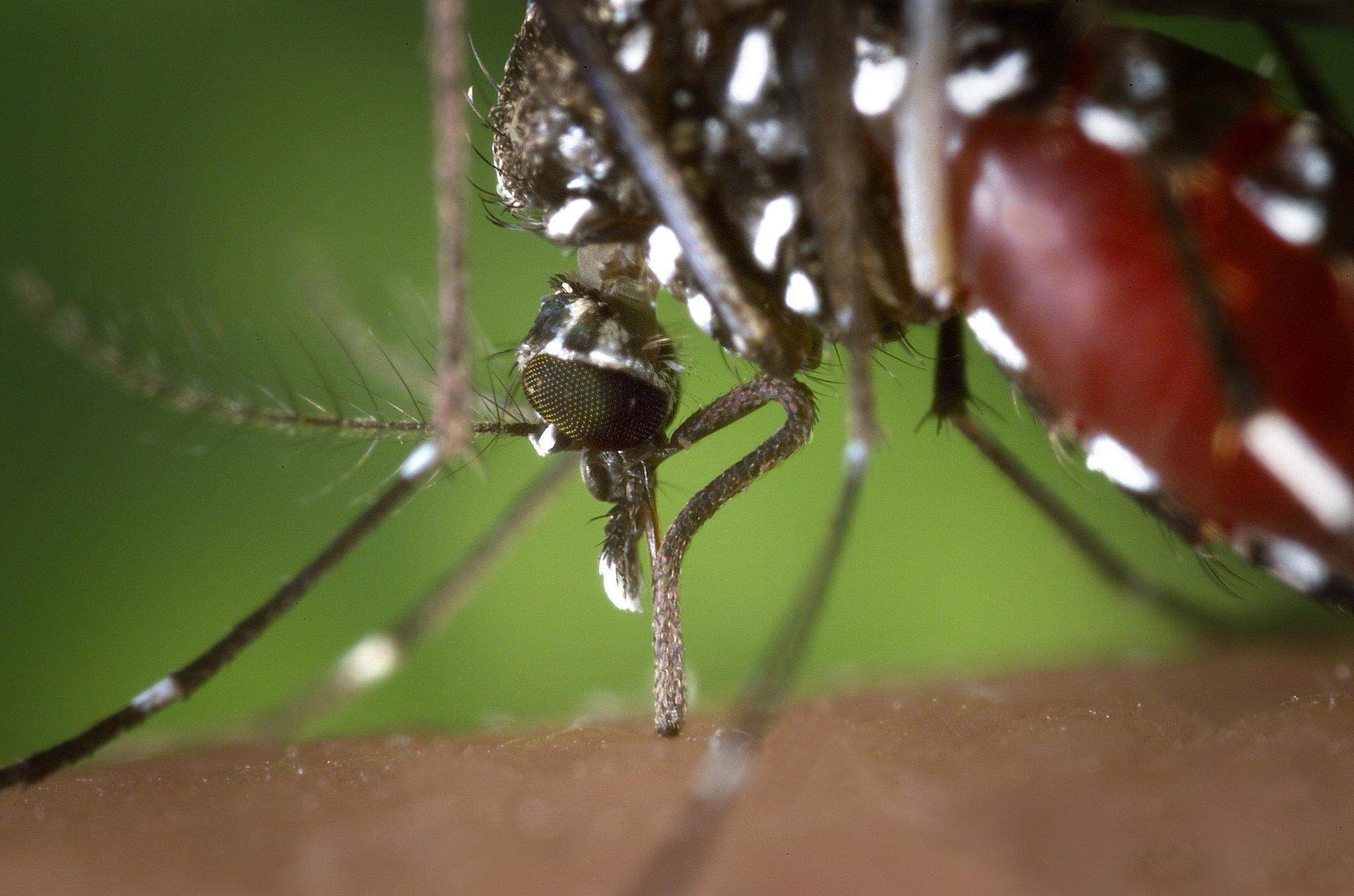 mücken im schlafzimmer – abomaheber