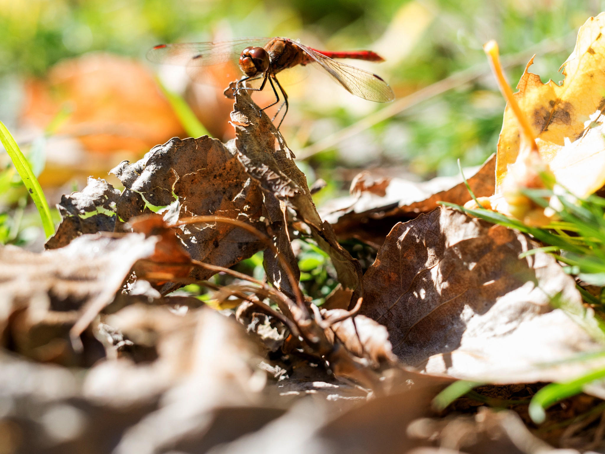 garten im oktober: das ist zu tun - und auf keinen fall die rosen, Gartengerate ideen