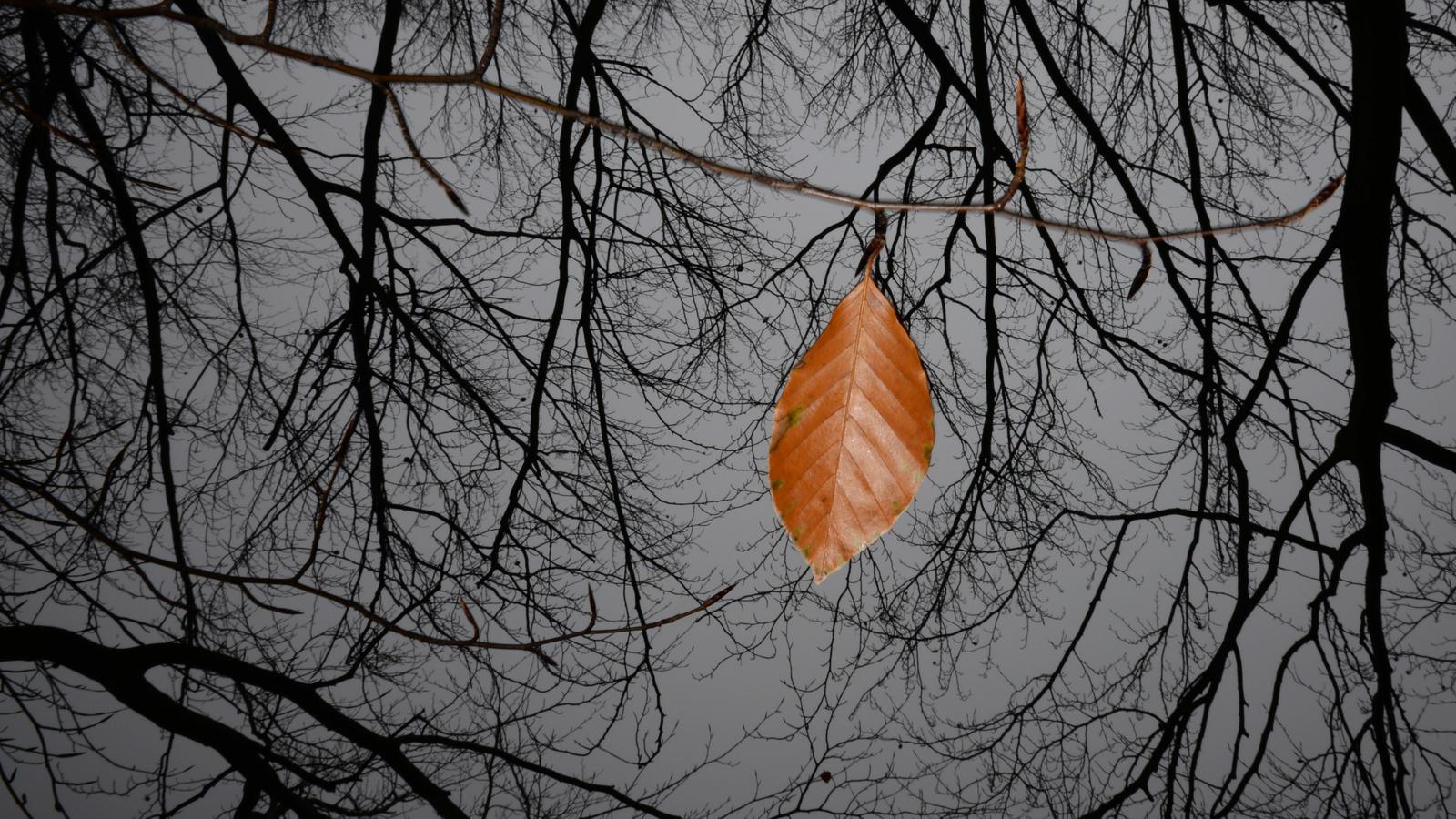 Wettertrend für deutschland vom 31.10.2016: typisch november ...