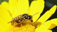 Angst vor Wespen? So verhalten Sie sich richtig
