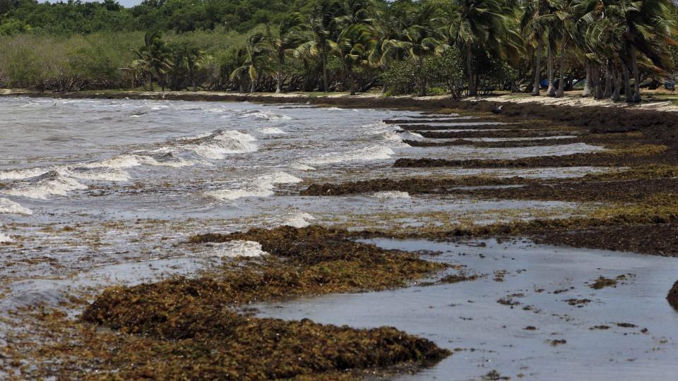 algen karibik vs schottland welcher strand ist sch ner. Black Bedroom Furniture Sets. Home Design Ideas